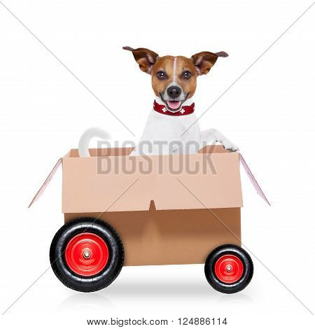 mail  delivery  jack russell dog in a big moving box on wheels ,isolated on white background