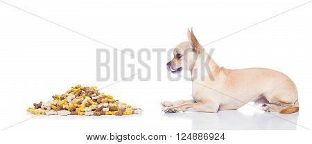 Hungry Dog With Owner Hand