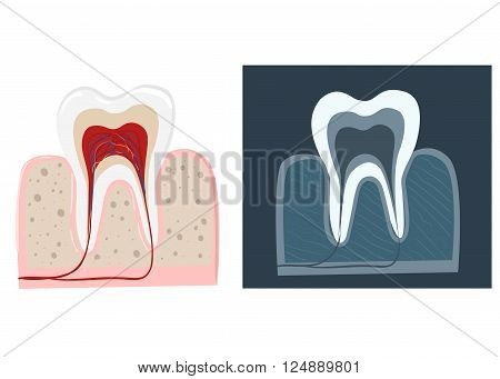 Dental care flat decorative icons set with stomatologist tools teeth care products isolated vector illustration caries clinic prosthetics tooth hygiene dentist tools Stomatologist.
