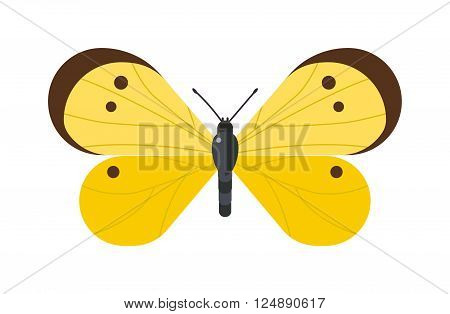 Flat butterfly vector. Flat butterfly isolated on white background. Flat butterfly vector illustration. Colored flat butterfly isolated on white background. Butterfly isolated. Butterfly cartoon style