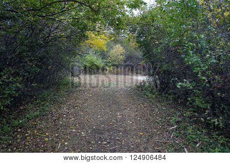 A footpath in the Lake Renwick Heron Rookery Nature Preserve, in Plainfield, Illinois,