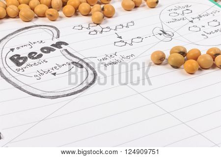 Soybean, chemical formula, beans and blue chemistry with reaction formula.