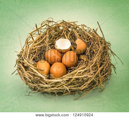 the twigs nest with brown chicken eggs with broken and empty shell egg