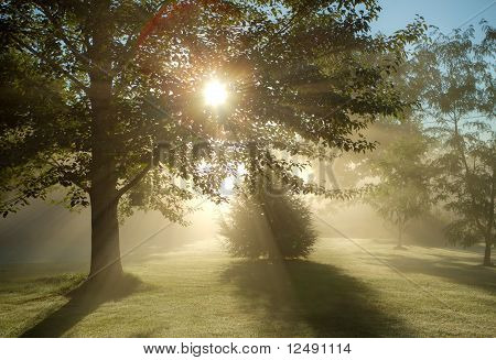 Foggy Morning Sun