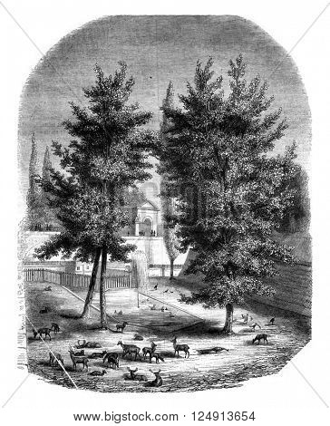 La Fosse aux Biches, in Bern, vintage engraved illustration. Magasin Pittoresque 1847.