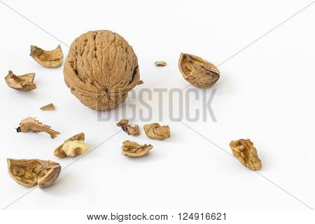 A big whole walnut and a cracked walnut pieces. Isolated on white background.