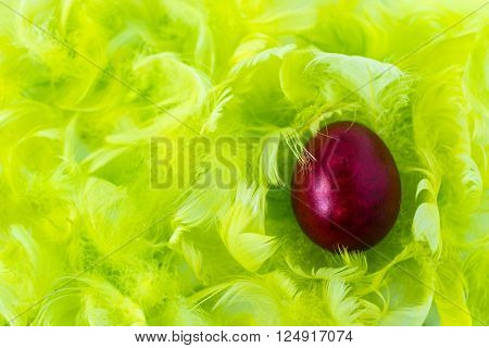 red easter egg on green feathers background
