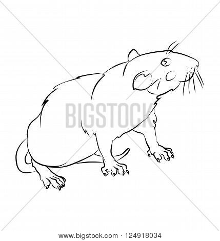 black and white rat image - perfect for children's coloring books and not only