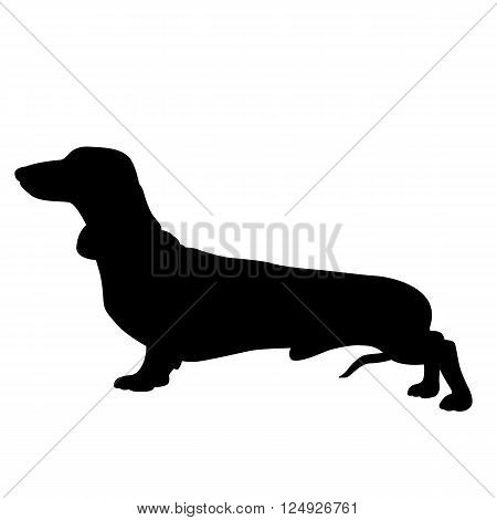 Dachshund dog black silhouette isolated vector illustration