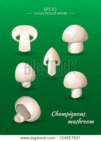 Field mushroom. Champignons. Agaricus campestris. Food and cooking collection. Vector illustration set of natural products