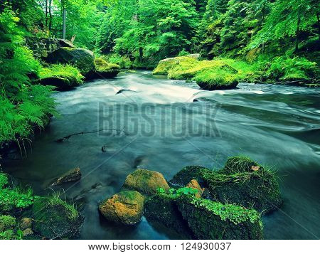 Mountain Stream In Sandstone Gulch And Below Green Branches Of Acacias, Beeches And Oaks. Water Leve