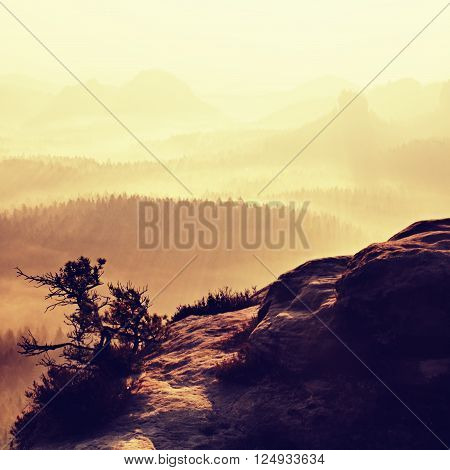 Fantastic dreamy sunrise on top of rocky mountain with view into misty valley.Mountain view.Foggy mountain.Dreamy forrest. Sunrise clouds. Forest hill.Autumn mist.Misty peaks.Foggy landscape. Rock top