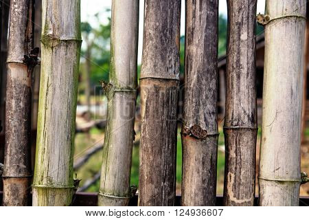 background from old bamboo sticks, wood texture