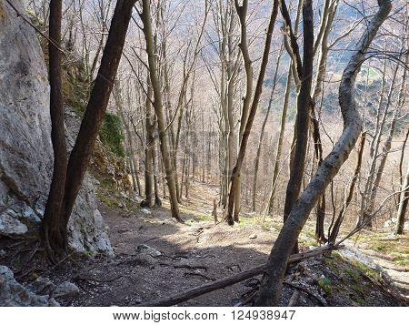 Approach Trail To Rock Climbing Cliff In Kotecnik Slovenia