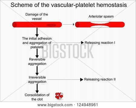 Schematic mechanism of the vascular platelet hemostasis