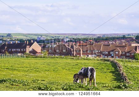 Horse and calf in meadow in Whitby in North Yorkshire in England. Whitby is a seaside port and town on the coast of the river Esk.