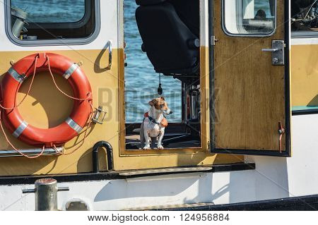 Dog in a life jacket on board the boat.