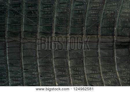 Alligator leather hide skins in green colour