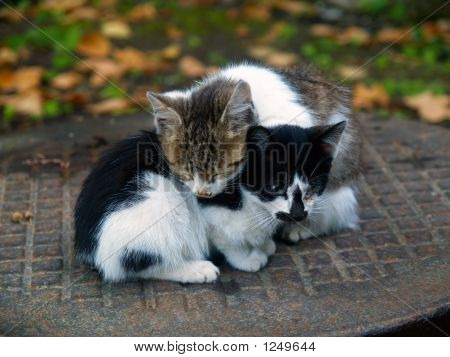Pair Of Pitiable Homeless Small Cats Get Warming  Series 3 Of  3