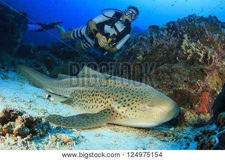 Young woman scuba diver and Leopard Shark