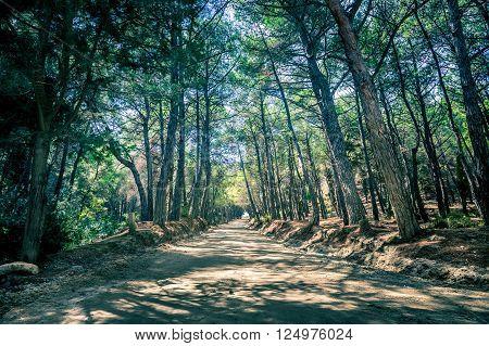 Long empty road in greek forest on Kos island