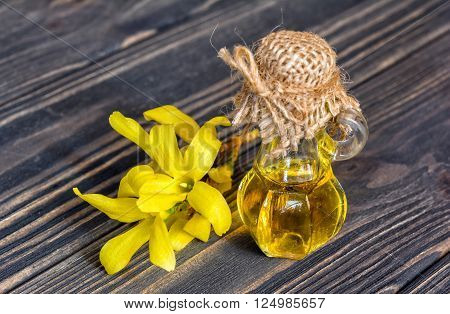 Essence and flower of forsythia on wooden background