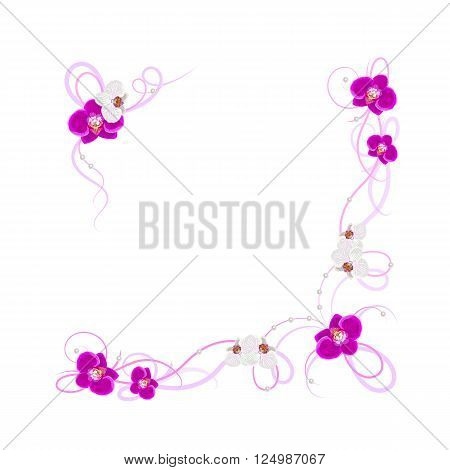 Arrangement of orchid flowers isolated on white background for greeting card or invitation design.