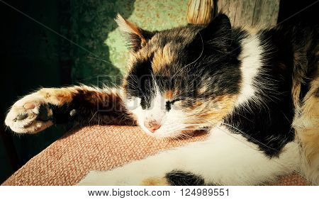Spotted country cat sleeping. Cute kitten resting