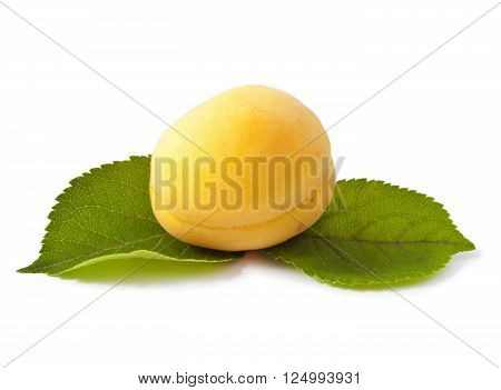 Sweet apricot fruit with leafs on white background