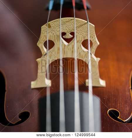 Cello strings closeup in violin maker worshop