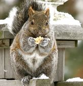 pic of swingset  - a canadian squirrel eating a cracker on the top of my swingset - JPG