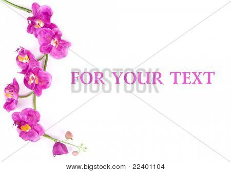branch of orchids with a place for your text
