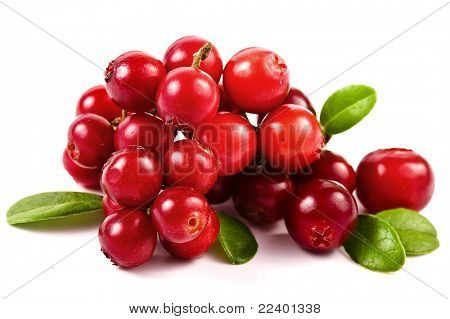cranberries  isolated on white background