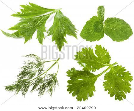 fresh herbs ( celery ,  mint , dill, cilantro coriander ), isolated on white background