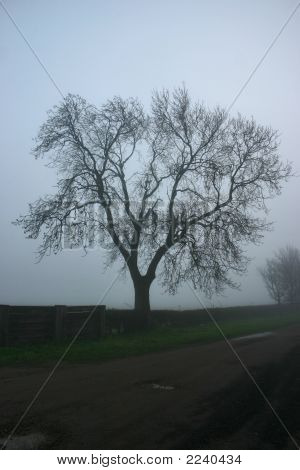 Treesillouette