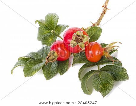 Rose hip isolated on white background