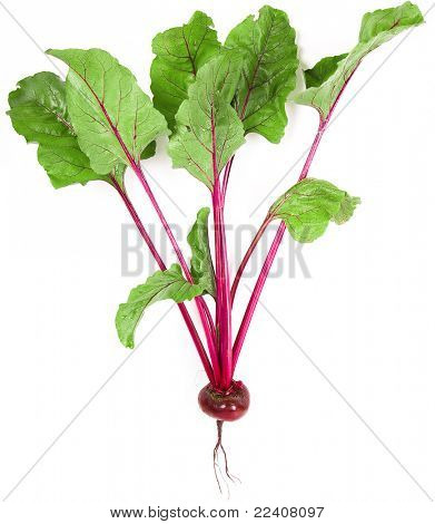 beet root isolated on white