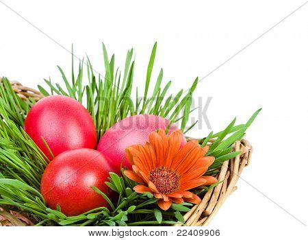 Red Easter eggs in the green nest isolated on white background