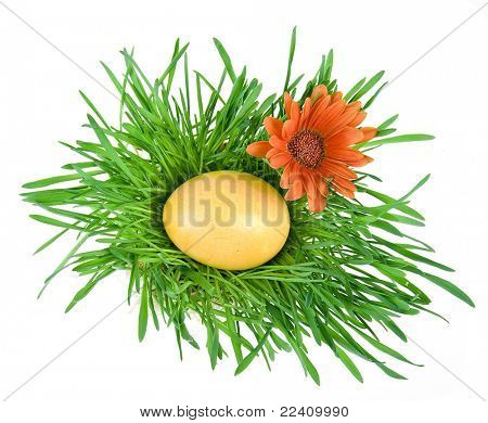 Golden Easter eggs in the green nest isolated on white background