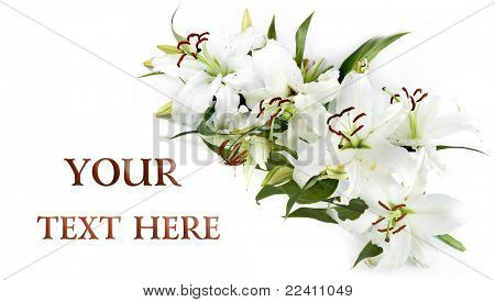 White lily frame , isolated with space for your text