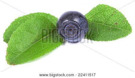 Bilberry isolated over a white background