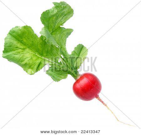fresh  radish  isolated on the white background