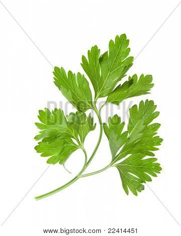 fresh herbs parsley on a white