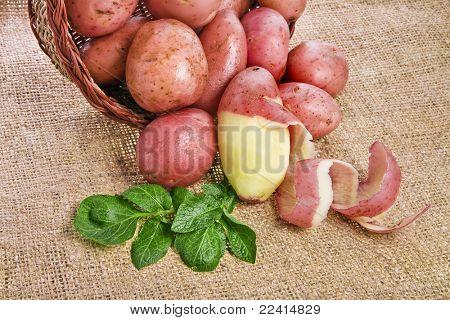 frischen Kartoffeln in einem Korb auf eine Entlassung