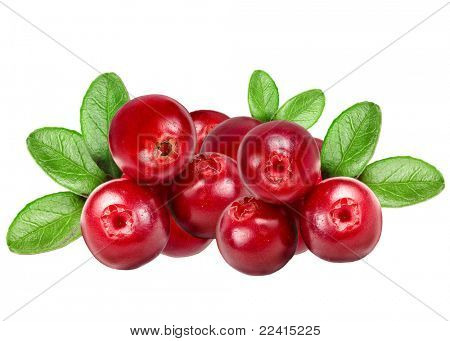 Preiselbeeren isolated on white background