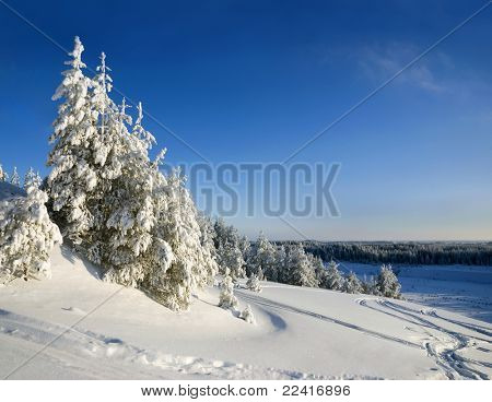 Winter mountain landscape with Christmas frozen trees
