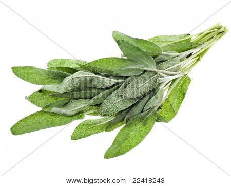sage  isolated on white background