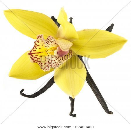 vanilla orchid pod isolated on white background