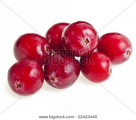arándano rojo