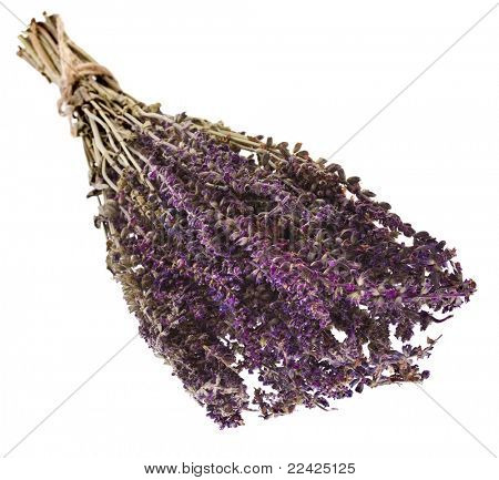 Bunch of dry flowering sage, isolated on white